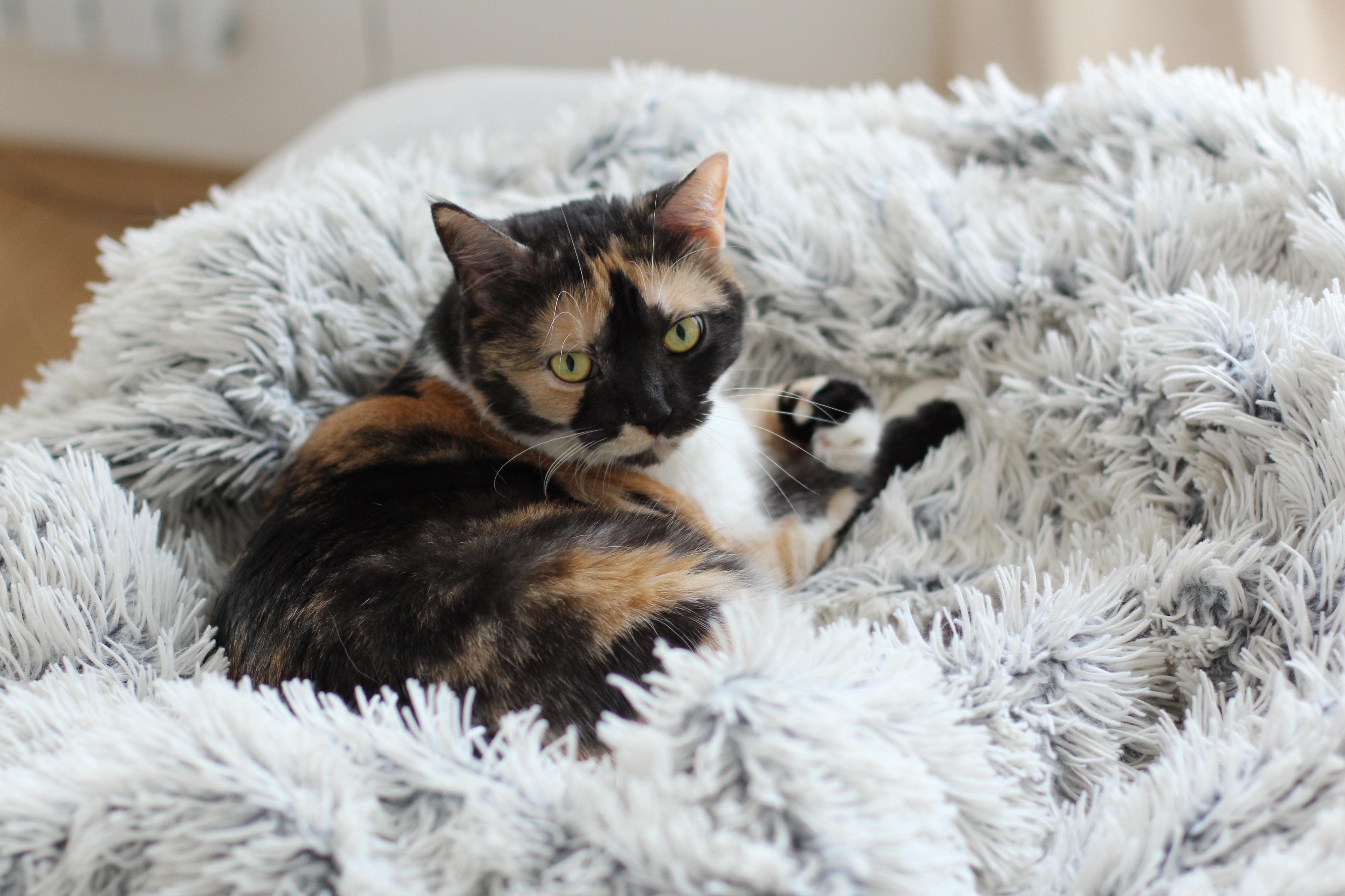 Poppy cica macska